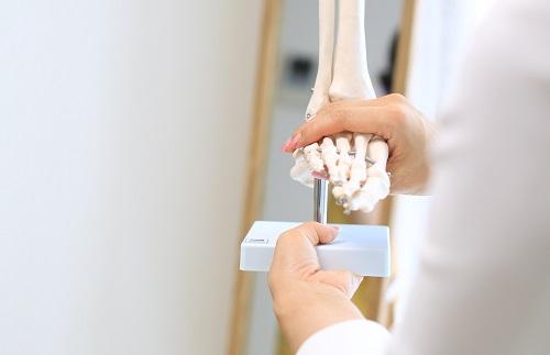 足の骨格説明アップ