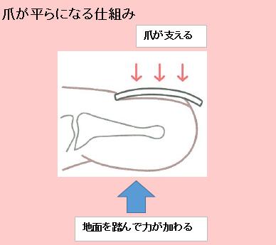爪の圧力支え|サロン美足